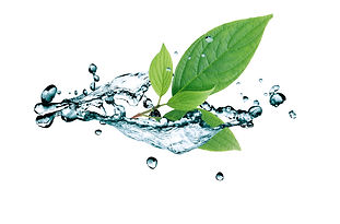 Ecology concept. Green leaves in water s