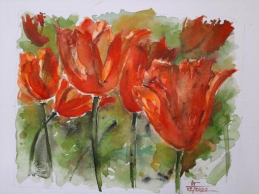 Liberation Tulips
