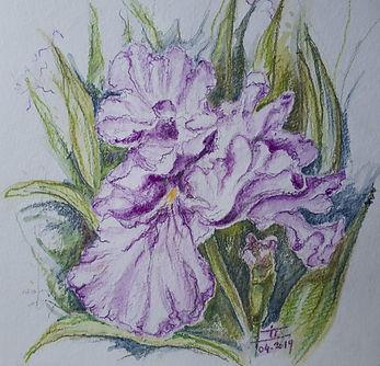 Purple Iris.jpg