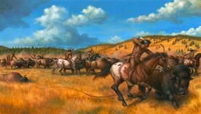 Harness Horse Appaloosa