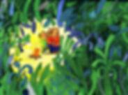 olivia_villet_image3.jpg