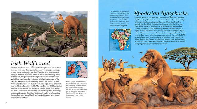 Little Lions Irish Rhodesian