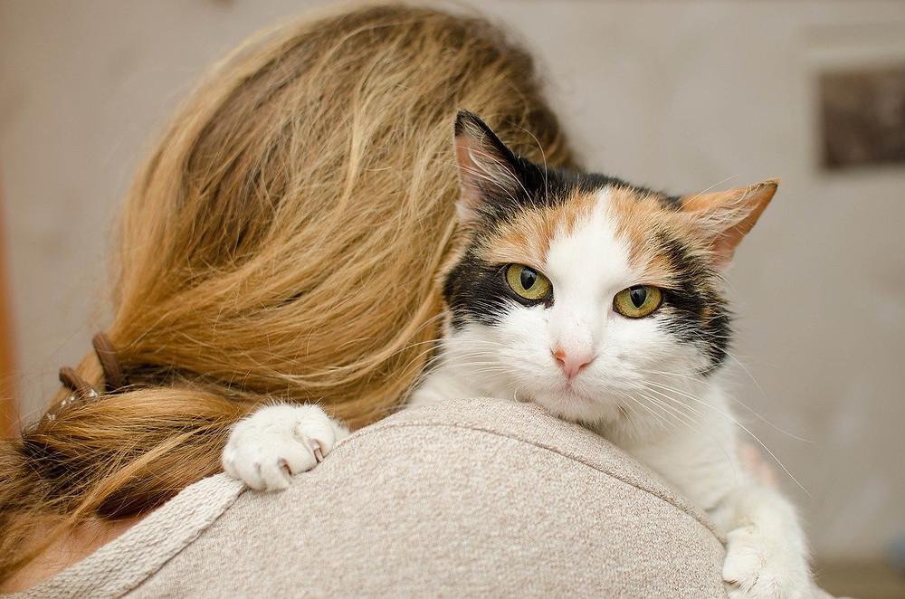 Chica cogiendo a un gato resignado