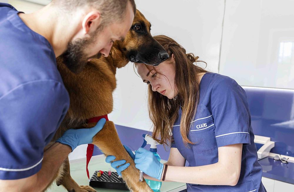 Consejos antes de buscar trabajo de ATV o auxiliar de clínica veterinaria.