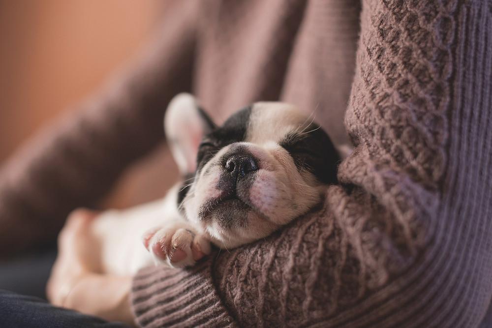 5 consejos para la primera semana del cachorro en casa