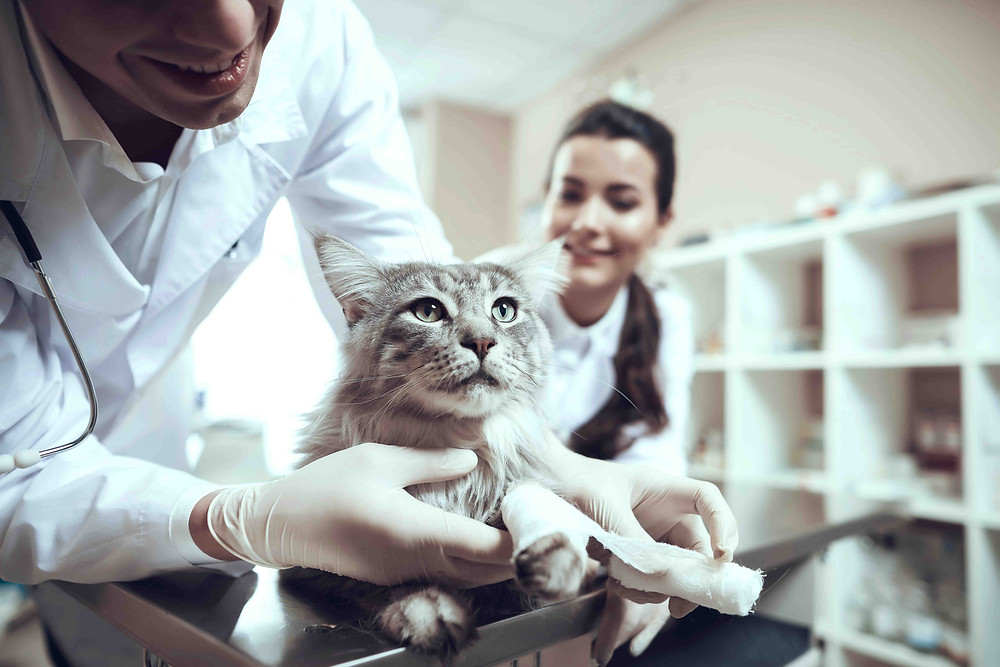 papel del Auxiliar Técnico Veterinario en la gestión de una clínica