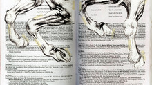 anatomía patas / bailarina