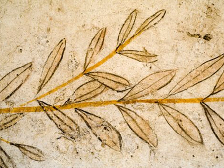 Discover the history of olive oil