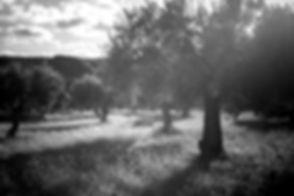 _05A2848_edited.jpg