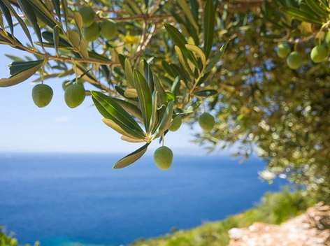 Olive oil consumption linked to a way of life: the Mediterranean lifestyle