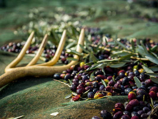 Directly from the oldest olive trees in Spain comes the Empeltre olive
