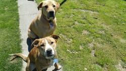 Ashleigh dogs.jpg
