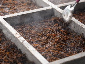 ミネラル豊富な日本古来のスーパーフード「ひじき」を食べる栄養面での4つのメリットとその効果