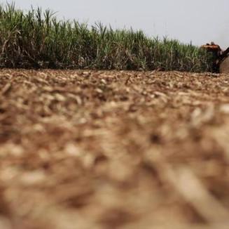 ¿Cómo evitar las Bajas en el Precio del Azúcar?
