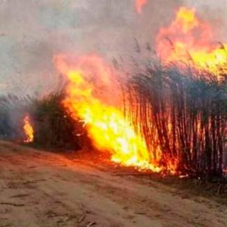 """(Injusto) """"Nos queman la caña de azúcar y después tenemos que pagar multas por daño ambiental"""""""
