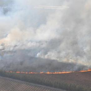 Reporte Rural: se renueva el desafío de dejar de usar el fuego