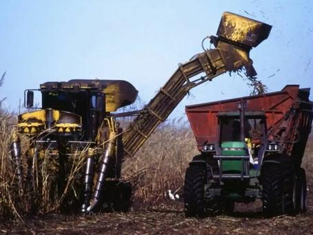 USDA: la producción mundial de azúcar alcanzará cifras récord en 2020-2021