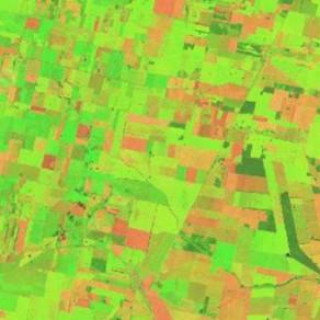 El área con caña de azúcar en Tucumán es levemente superior al año pasado