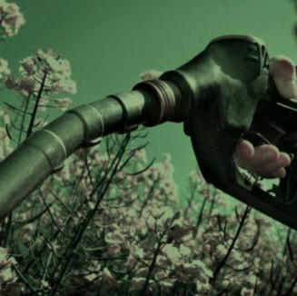 Productoras y empresarios destacan perspectiva de los biocombustibles