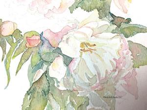 How to Grow Watercolor Peonies