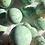Thumbnail: Turquesa Esferas