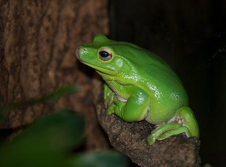 להפוך נסיך לצפרדע