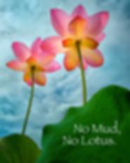 no mud no lotus.png