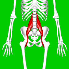 What is eating you at your Core aka The Psoas Muscle