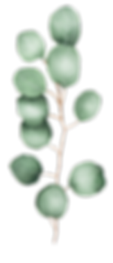 EucalyptusSelection_12.png