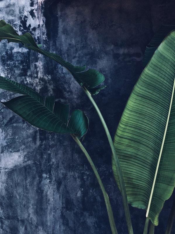 Palm Fronds Tulum 1_sm.jpg