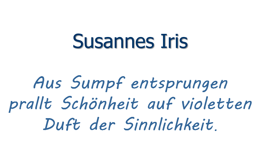 Susanne´s Iris