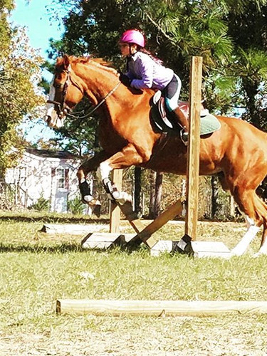Interested in horseback riding lessons f