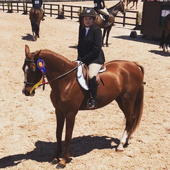 Long Stirrup Hunter this weekend at the