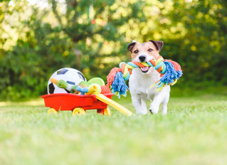 Why it is Not a Good Practice To Leave Your Toys With Your Dog?