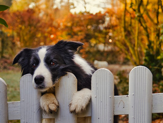 Is it Good to Have Rituals for Dogs Especially for Leaving and Arriving Home?