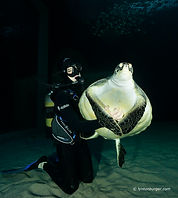 TOA Turtle01.jpg