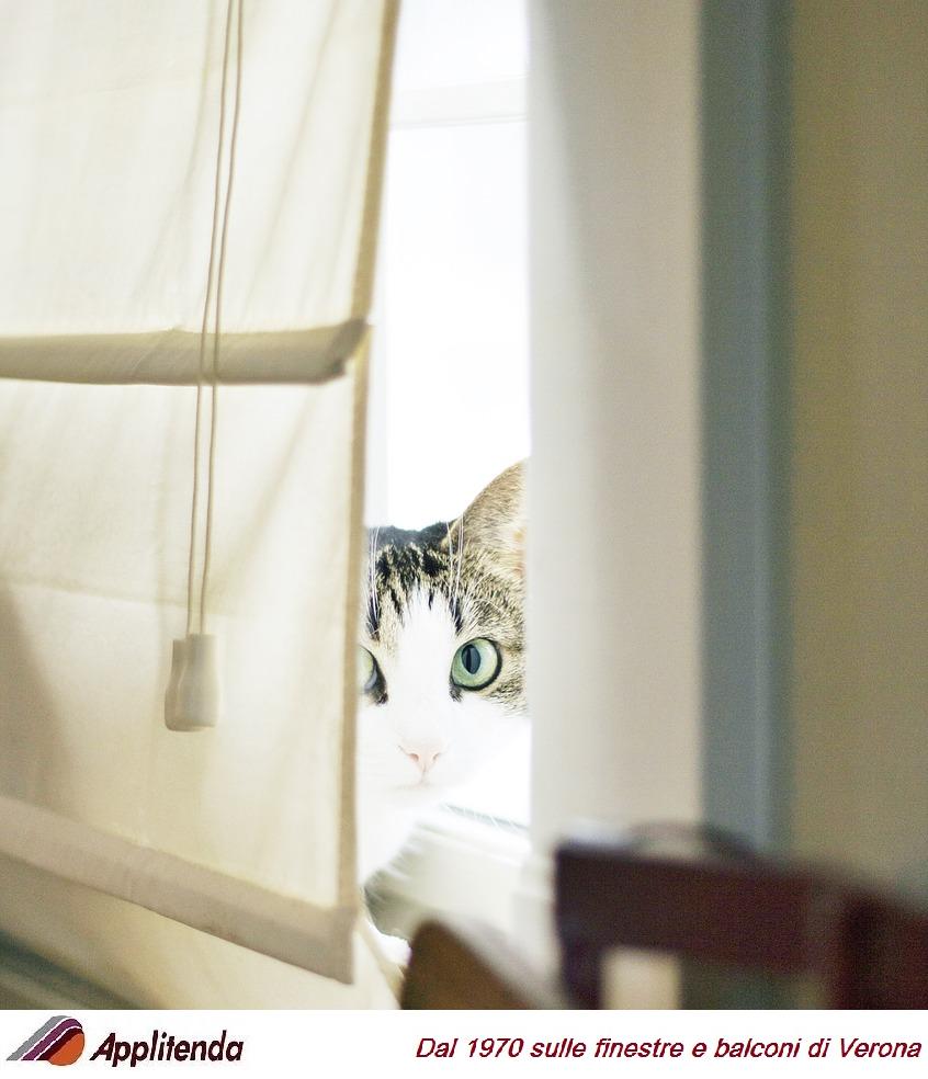 Gattino dietro ad una tenda da interno