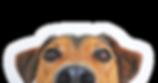 dog_cutout_01.png