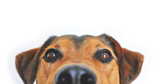 dog_cutout_01.png