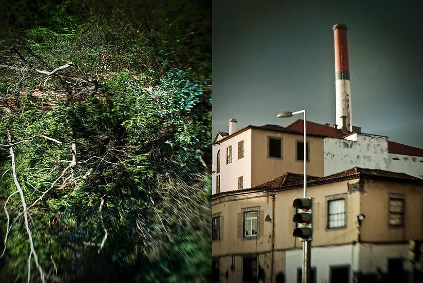 Bruno D'Alimonte - Factory - Root