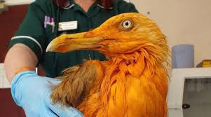 THE ORANGE SEAGULL WAS A SPECIAL AND PROPHETIC BIRD TO SEE