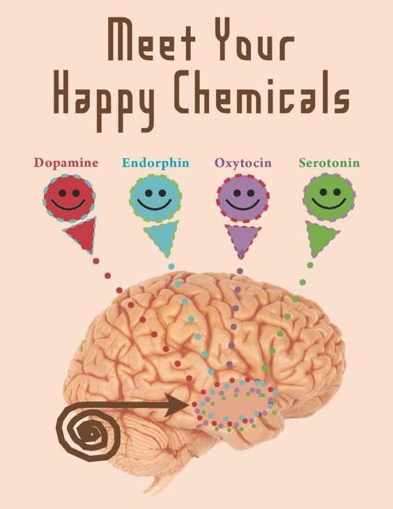 mutluluk hormonları