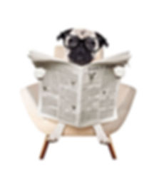 Pug with a compact tabloid newspaper