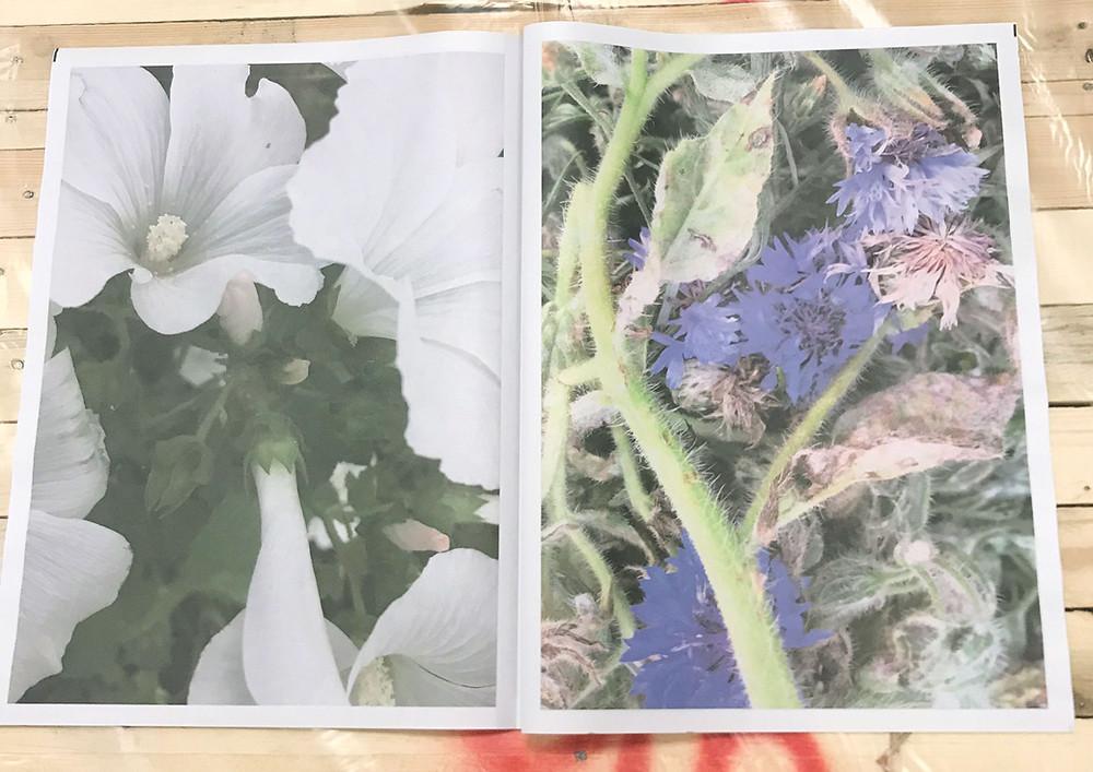 Wild Flower Portfolio by Koto Bolofo