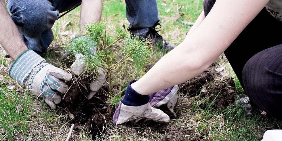 Free Tree Planting Day