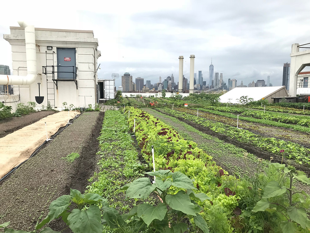 The Brooklyn Navy Yard rooftop farm