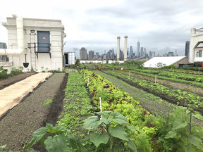 Visiting the Brooklyn Grange Rooftop Farm in New York City