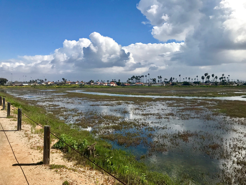 Tijuana Estuary wetlands