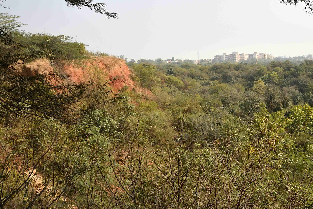 Aravalli Restored quarry and Delhi City