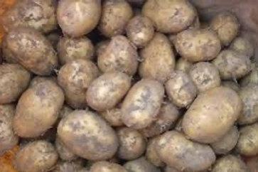 Dirty Maris Piper Potatoes